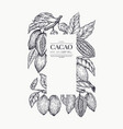 cocoa banner template chocolate cocoa beans vector image