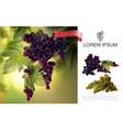 fresh natural grapes concept vector image vector image