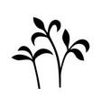 garden cress vector image vector image