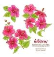 hibiscus flowers set vector image vector image