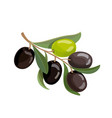 olives bunch logo green and black olives branche vector image vector image