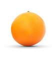 realistic orange isolated on white background vector image vector image