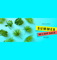 summer sale bannerbeautiful background vector image vector image
