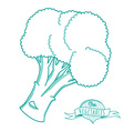 Outline hand drawn sketch of broccoli flat style vector image