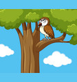 owl standing on branch vector image