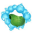 blue drops water and green leaf vector image vector image