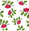 cowberry seamless pattern vector image vector image
