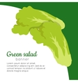 Green Salad Banner Healthy Food Concept vector image vector image
