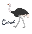 Bird ostrich vector image