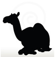 camel in Sitting pose vector image vector image