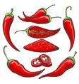 pepper harvest sketch vector image