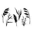 reed silhouette set vector image