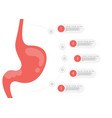 stomach icon human internal organs symbol vector image vector image