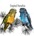 with parrots and tropical palm leafs vector image vector image