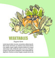 fresh vegetable assortment with text information vector image