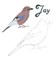 Educational game connect dots to draw jay bird vector image vector image