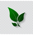 Green leaves Eco friendly vector image