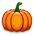 pumpkin on white background vector image vector image