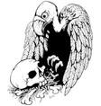 skull vulture vector image