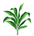 tropical plant leaves on white background vector image