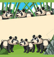 paper background with panda in bamboo forest vector image