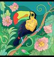 tropical bird toucan tropics composition vector image