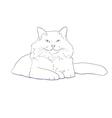 White furry cat on white