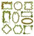 liana vines frames tropical climbing rainforest vector image vector image