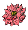 lotus flower in engraving style design element vector image