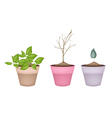 Lovely Green and Dry Plants in Flower Pots vector image vector image