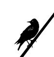 Starling vector image