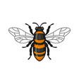 bee icon bug flat style logo on white background vector image