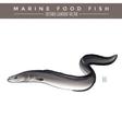 Eel Marine Food Fish vector image