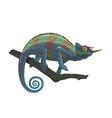 chameleon reptile sitting on branch vector image