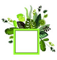 exotic tropical leaves vector image vector image