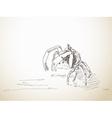 Sketch of crab vector image