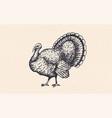 turkey vintage retro print vector image vector image