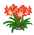 flowerbed of red flowers on a white background vector image vector image