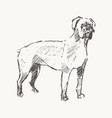 rottweiler hand drawn dog realistic sketch vector image vector image
