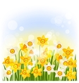 Spring flowers narcissus natural background vector image