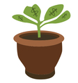 Dollar plant vector image vector image