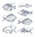 seafood sketch or set isolated hand drawn fish vector image vector image