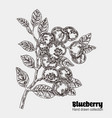 sketchy blueberry branch hand drawn berries vector image vector image