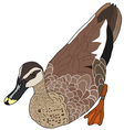 The of Duck vector image vector image