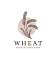 vintage lineart wheat branch logo vector image vector image