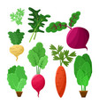 vitaminic vegetable collection color poster vector image