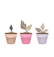Three Abstract Brown Trees in Flower Pots vector image
