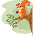 cartoon squirrel holding pine cone on tree branch vector image vector image