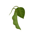 green soy pod with leaf healthy vegetarian food vector image vector image