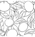 mandarin branches pattern vector image vector image